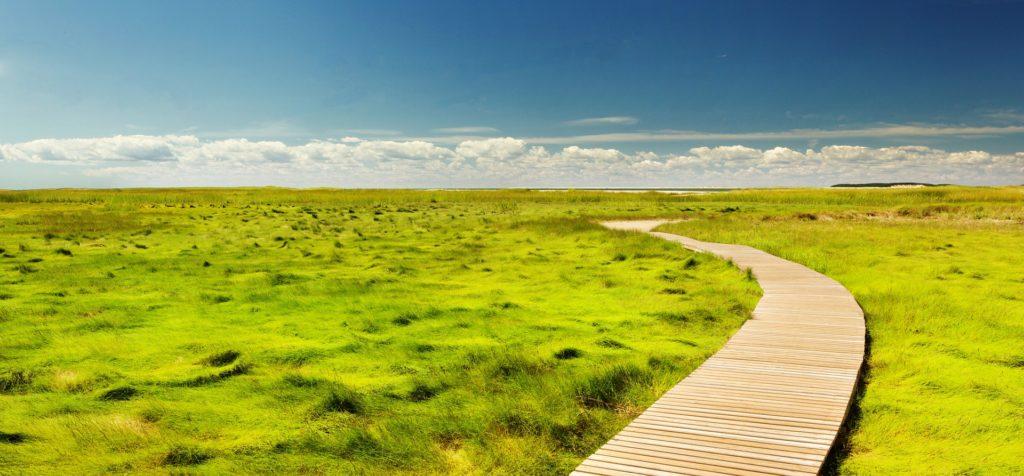 Bewegung in krisenreichen Zeiten - Bild von einem Weg in grüner Landschaft